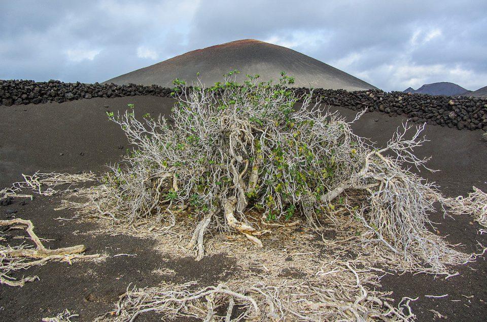 Lanzarote: A Ilha das Montanhas de Fogo | Canárias