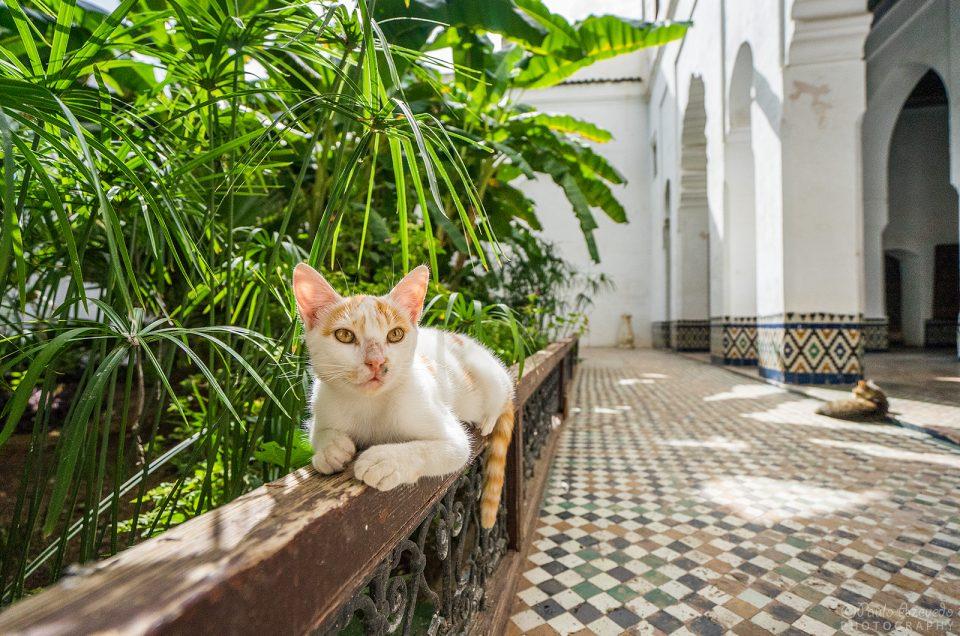 Os gatos de Marrocos [Fotogaleria]