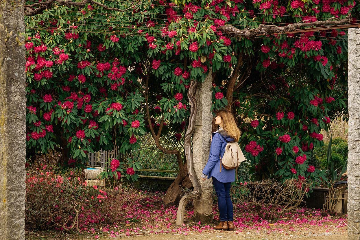 Jardim do Arnado