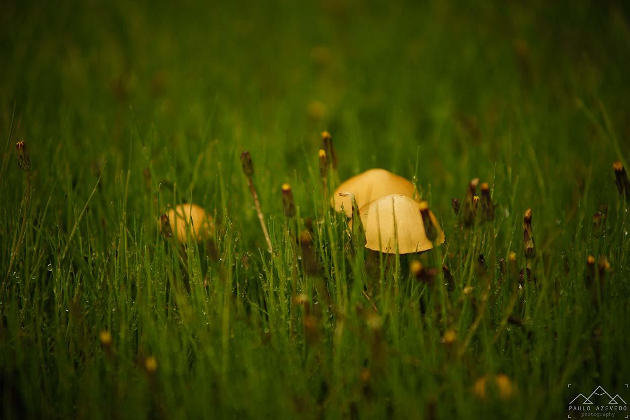 Cogumelos no caminho
