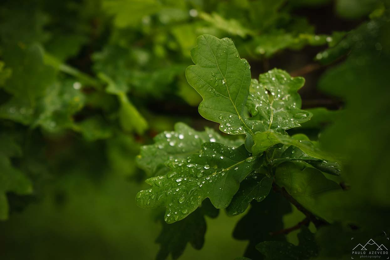 Folhas com gotas da chuva