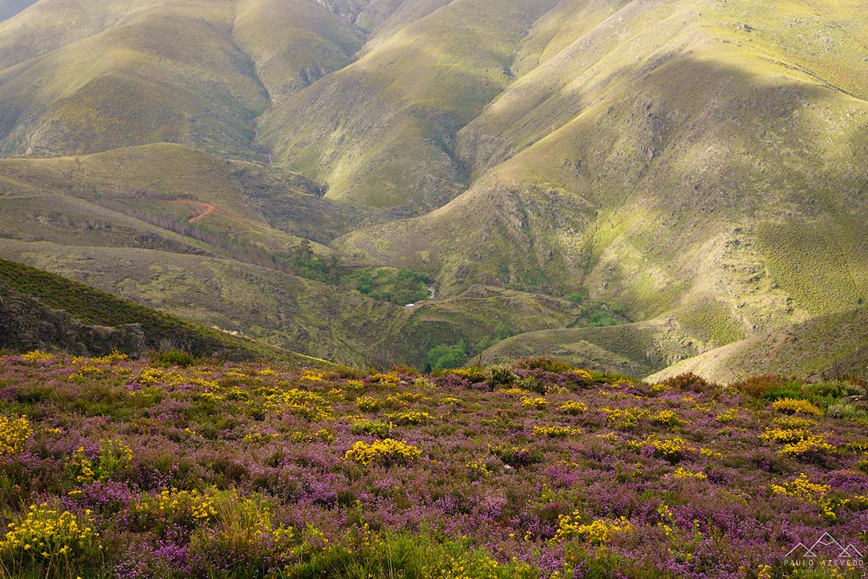 Montanhas floridas no trilho de Drave