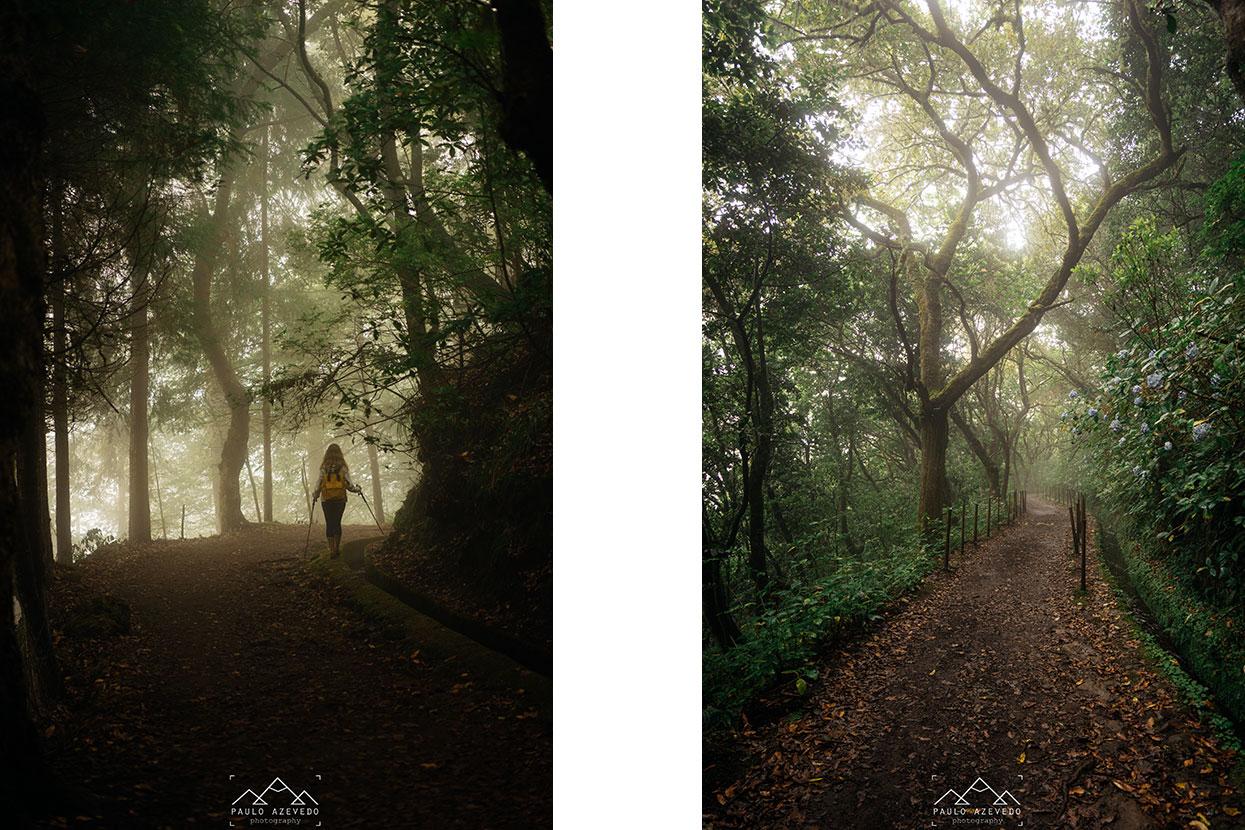 caminhando pelo trilho um caminho para todos