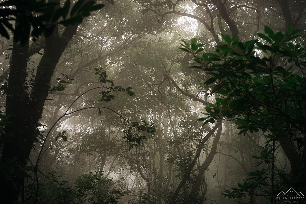 neblina na floresta laurissilva