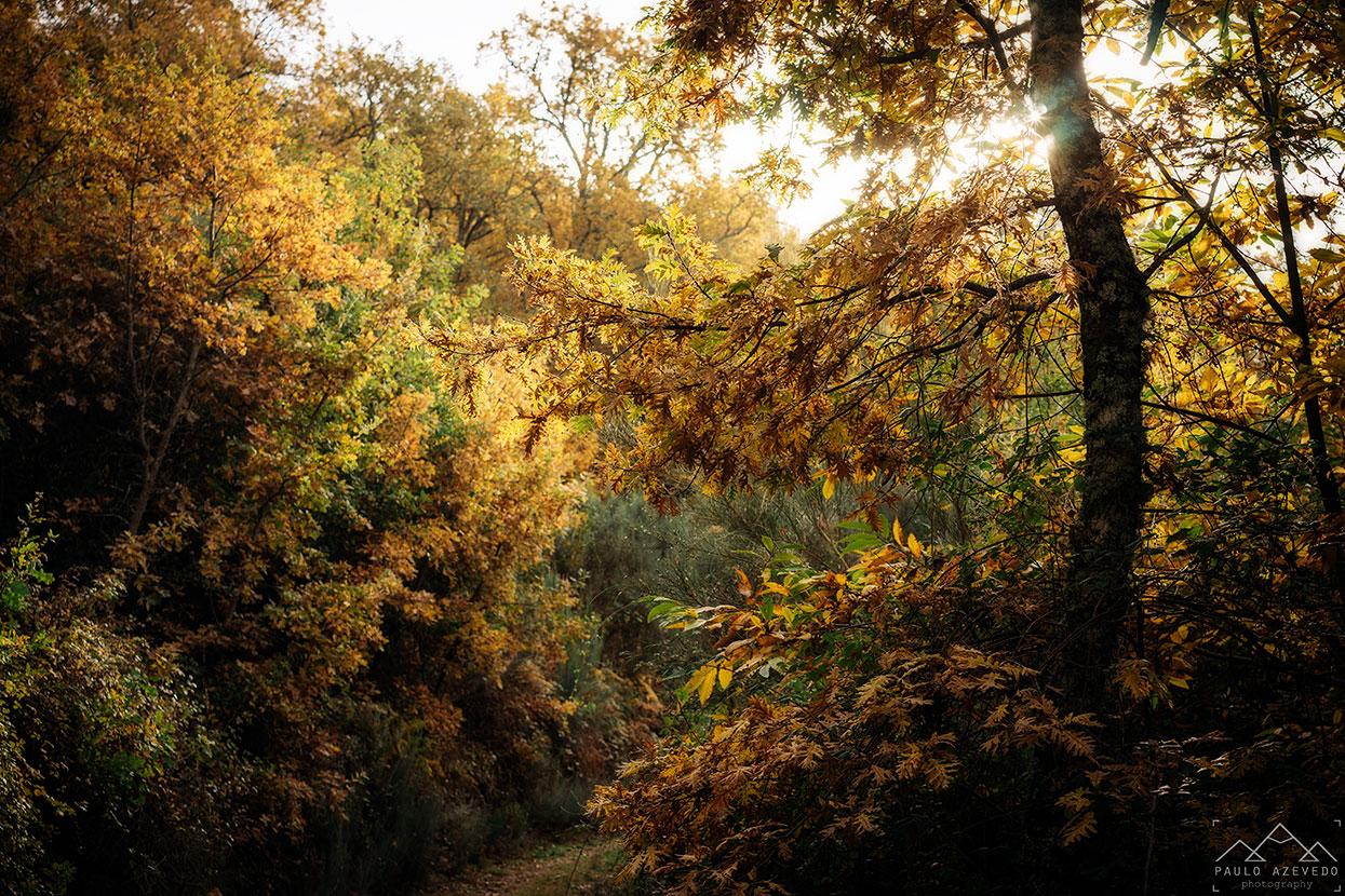 árvores com tons outonais na mata do bugalhao