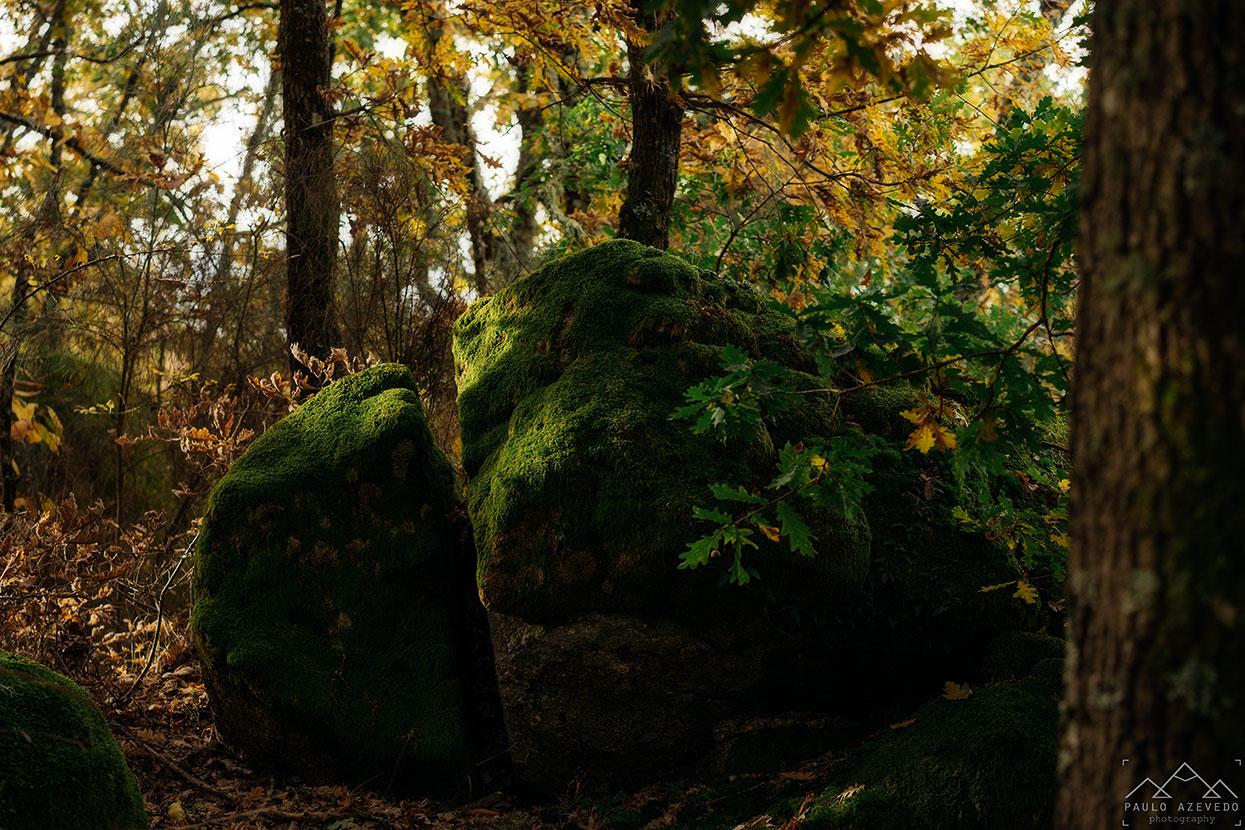 pedra coberta de musgo na mata do bugalhao