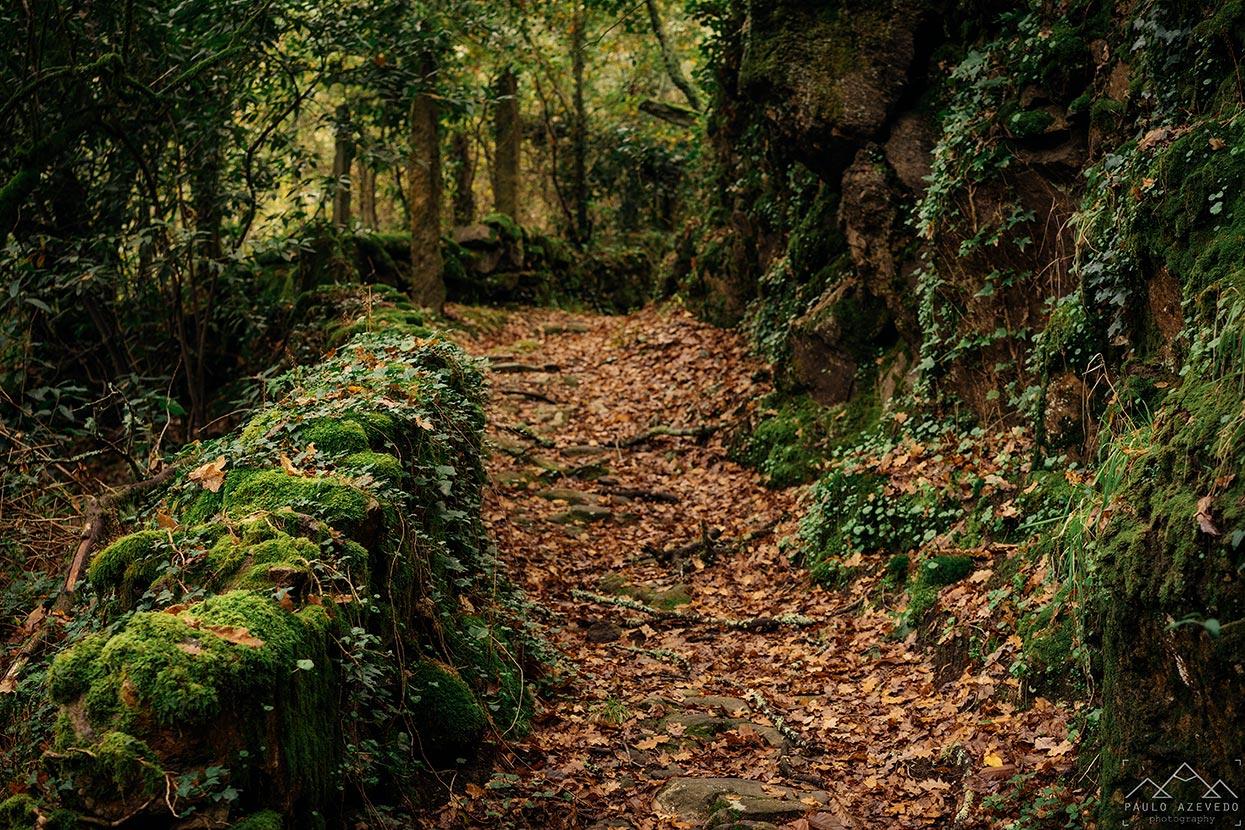 trilho coberto por folhas na ecovia do vez