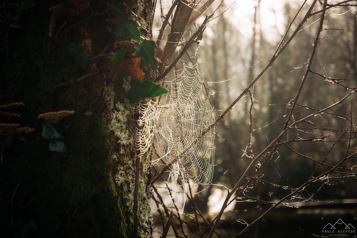 detalhe de uma teia de aranha com orvalho na ecovia do vez