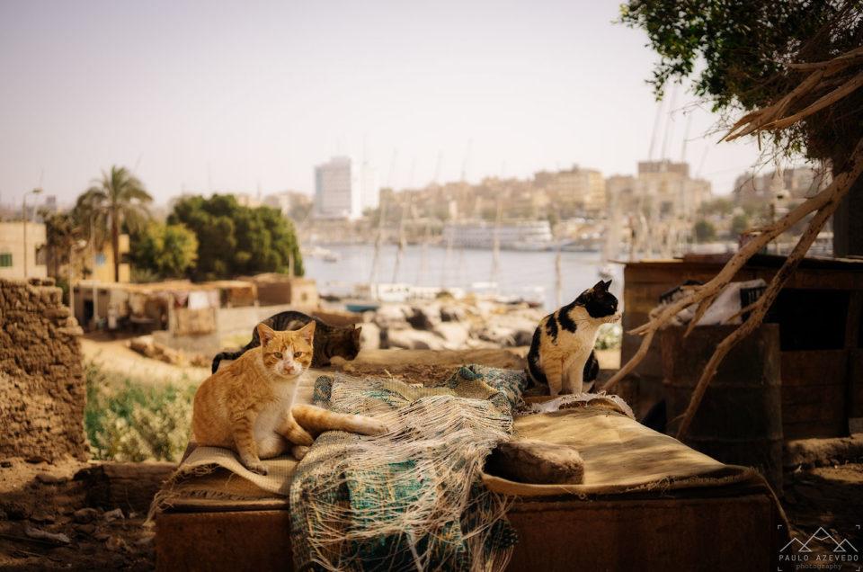 Egito, o dia da nossa chegada a outro mundo