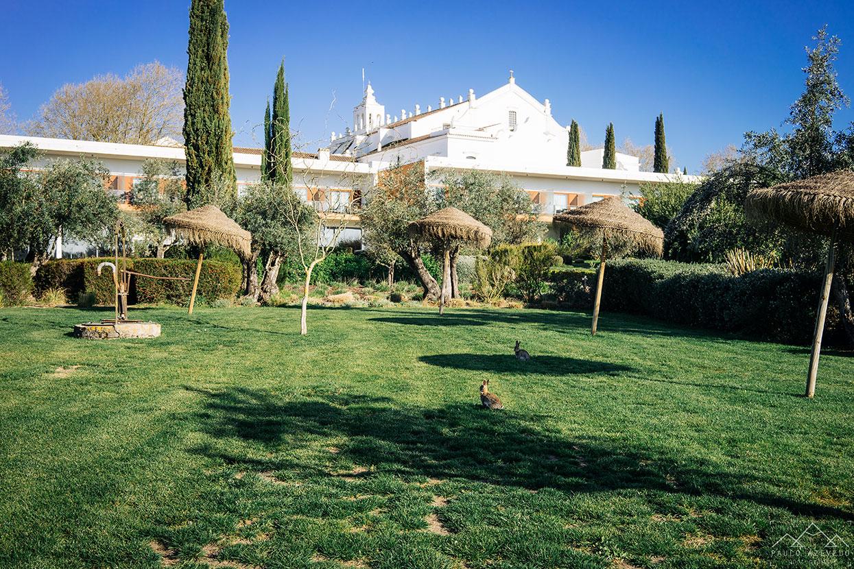 Coelhos bravos, Convento do Espinheiro, um dos melhores hotéis de Évora