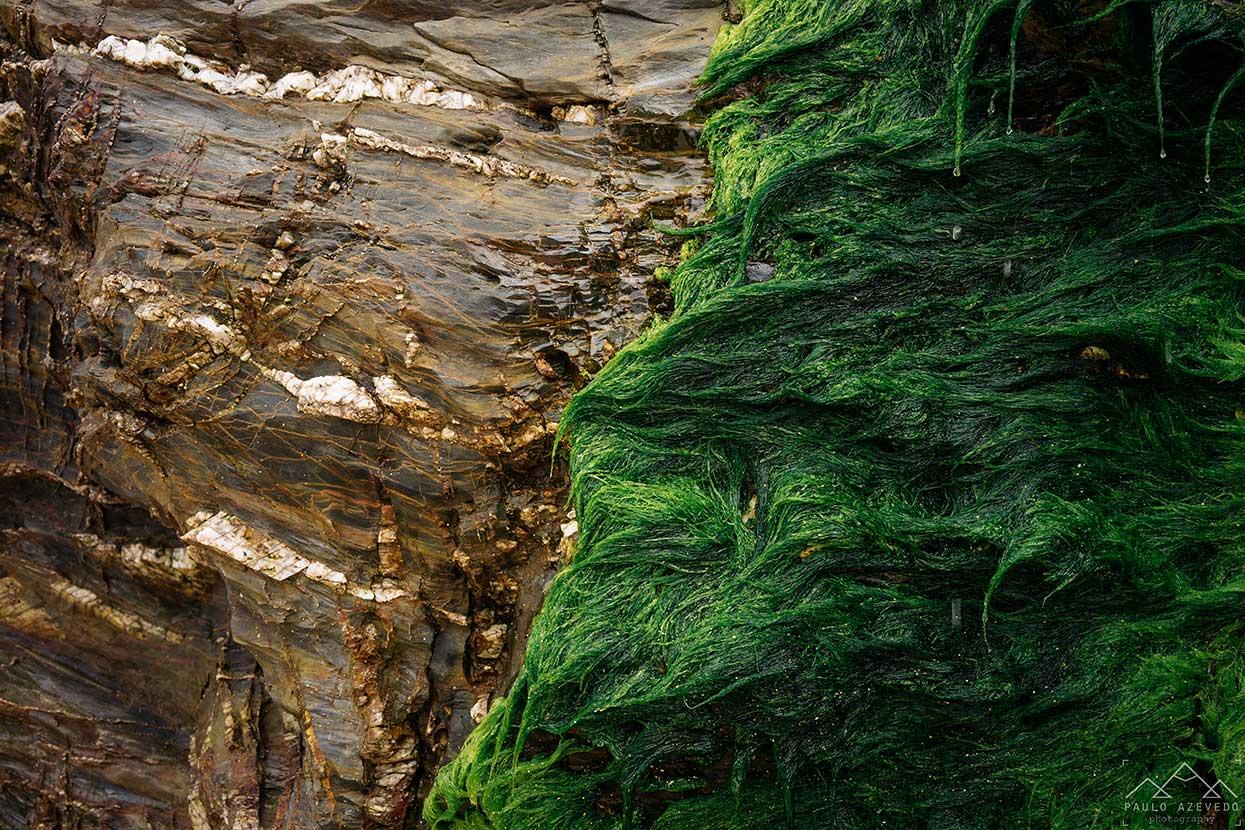 rochas e algas na praia da Samouqueira