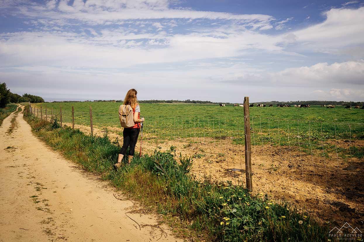 vista para os campos agrícolas e vacas no trilho Dunas do Almograve