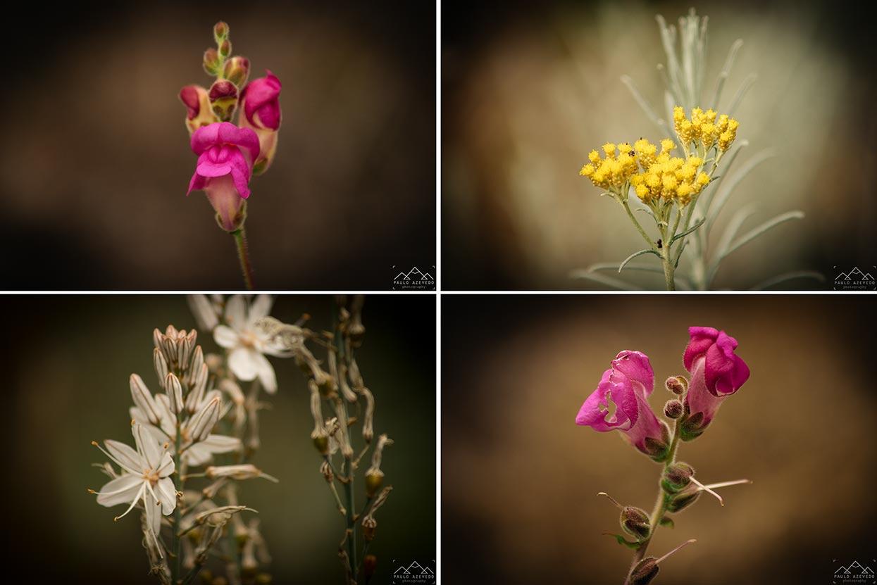 Vegetação florida no Trilho dos Poços do Barbarroxa, Reserva Natural das Lagoas de Santo André e da Sancha