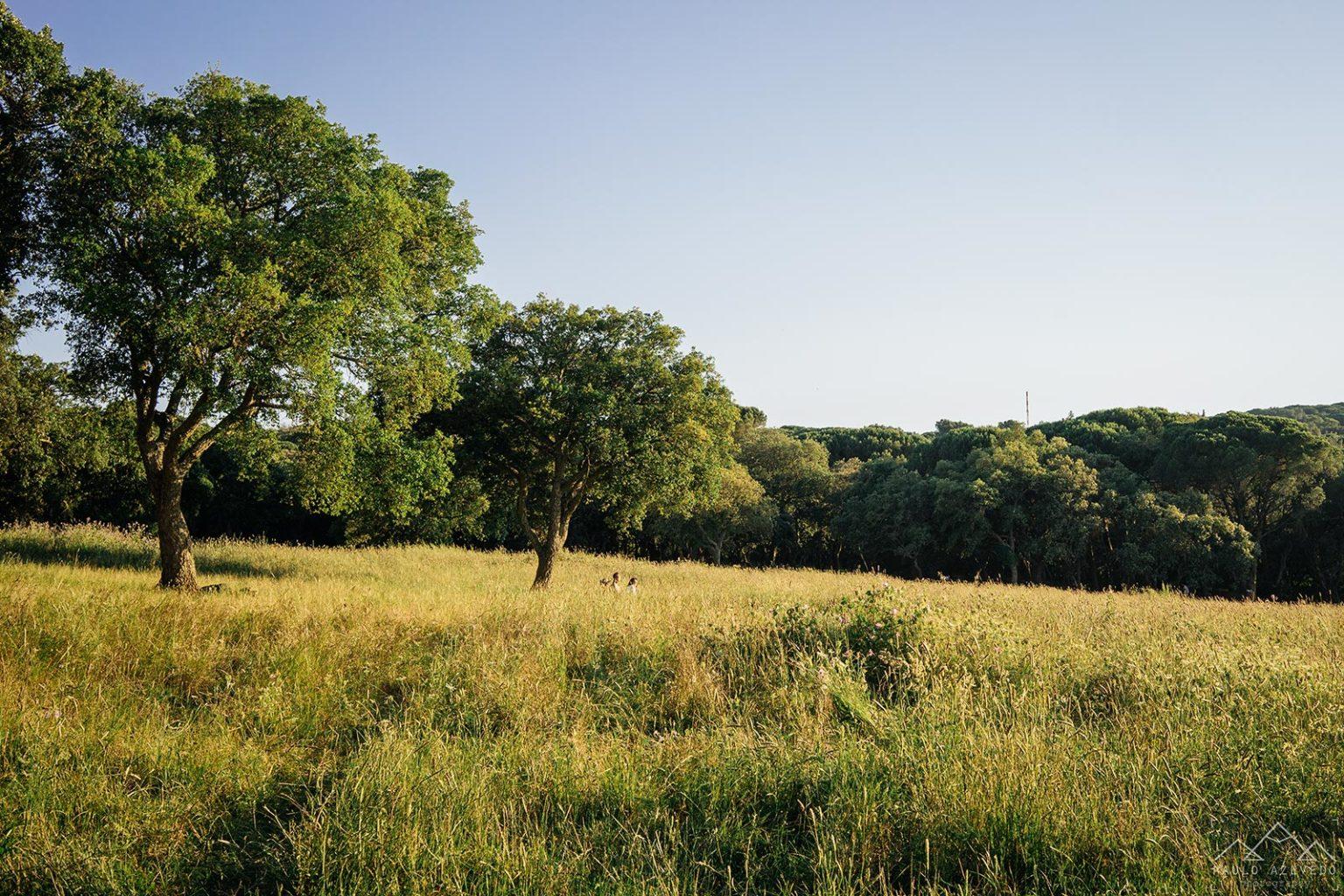 Parque do Calhau