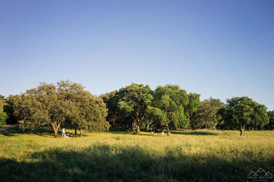 Volta do Planalto, o nosso trilho preferido no Parque Florestal de Monsanto