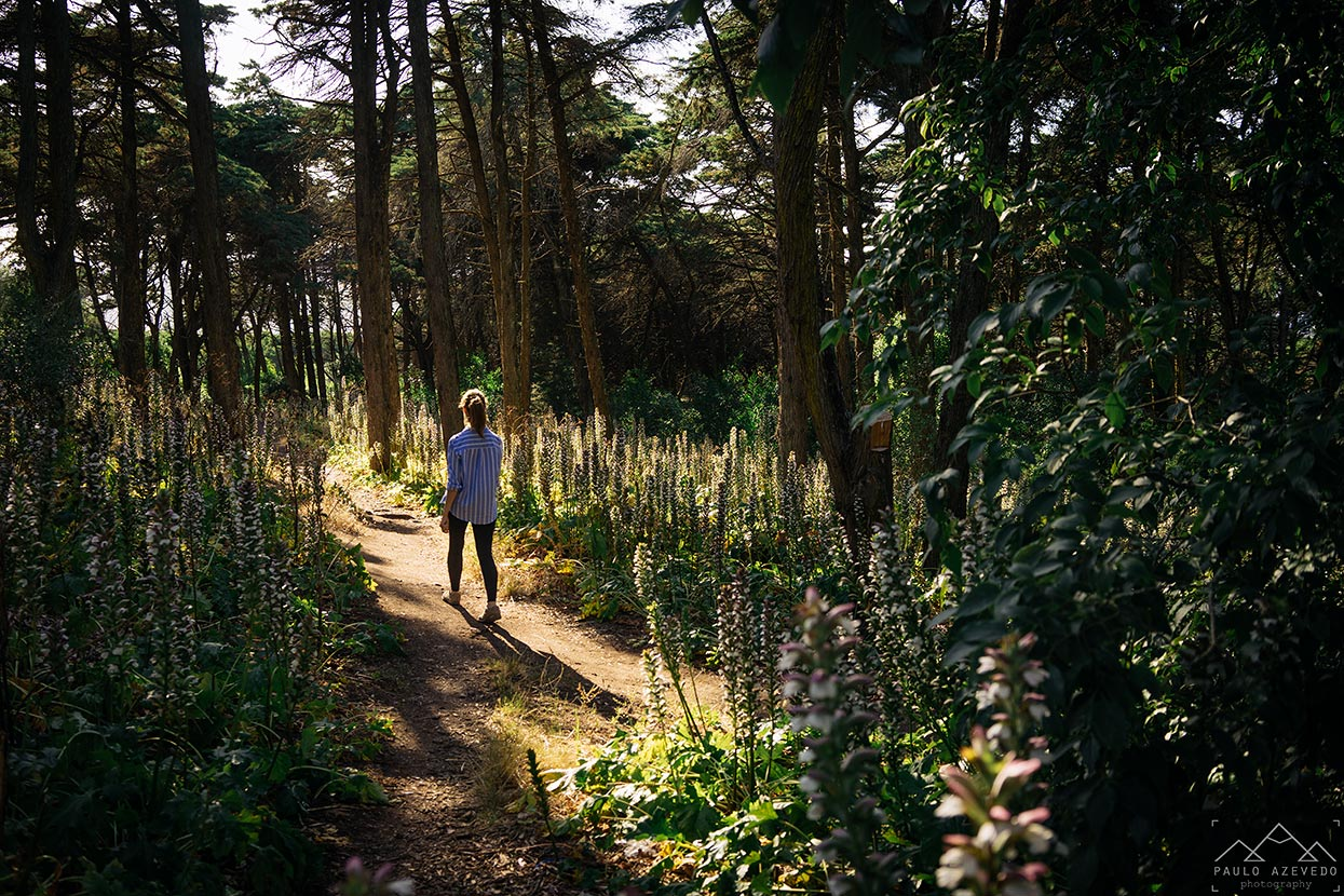Caminhando pelo Parque Florestal de Monsanto, Lisboa