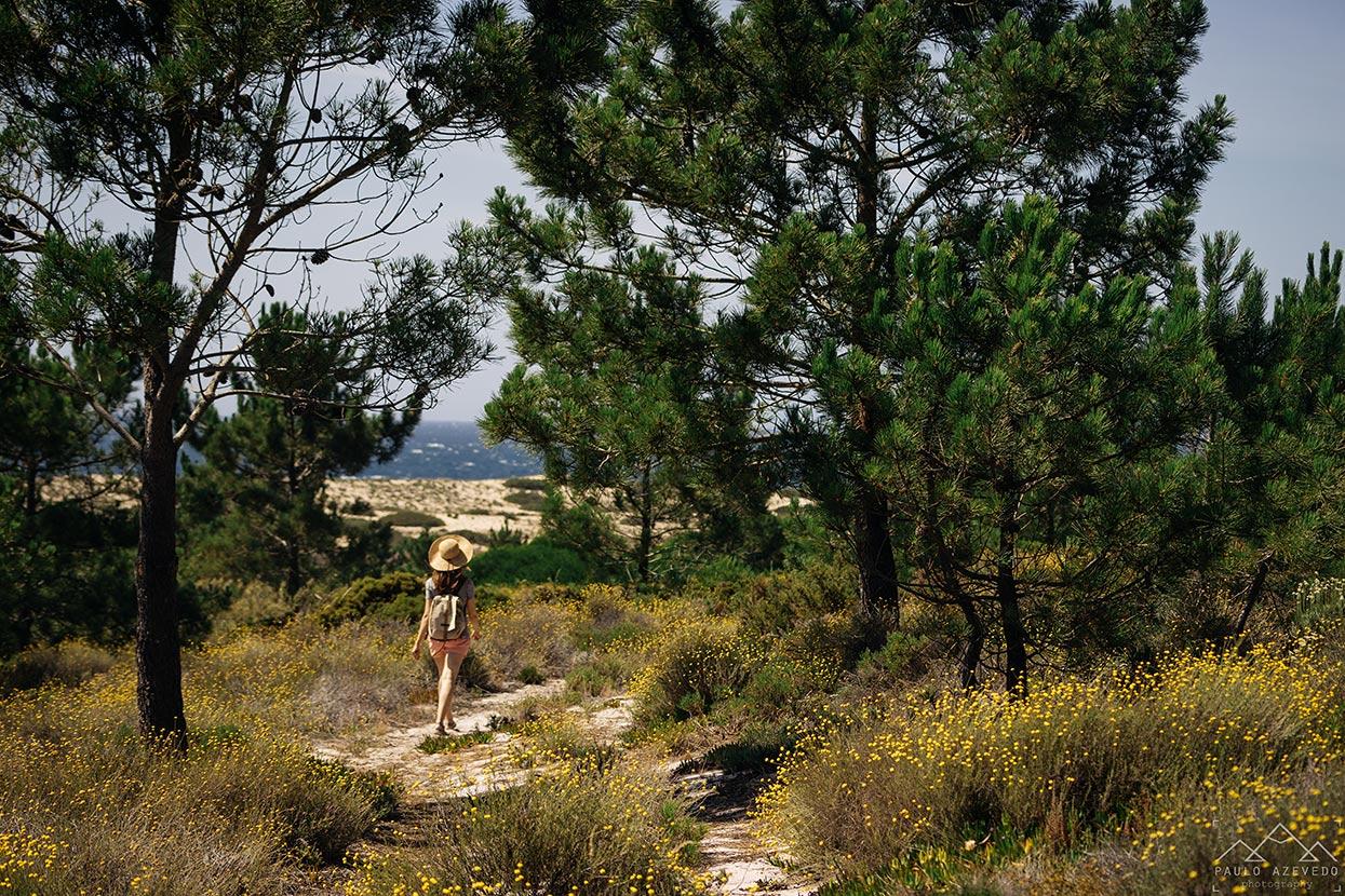 Percurso pedestre na Reserva Natural das Lagoas de Santo André e da Sancha