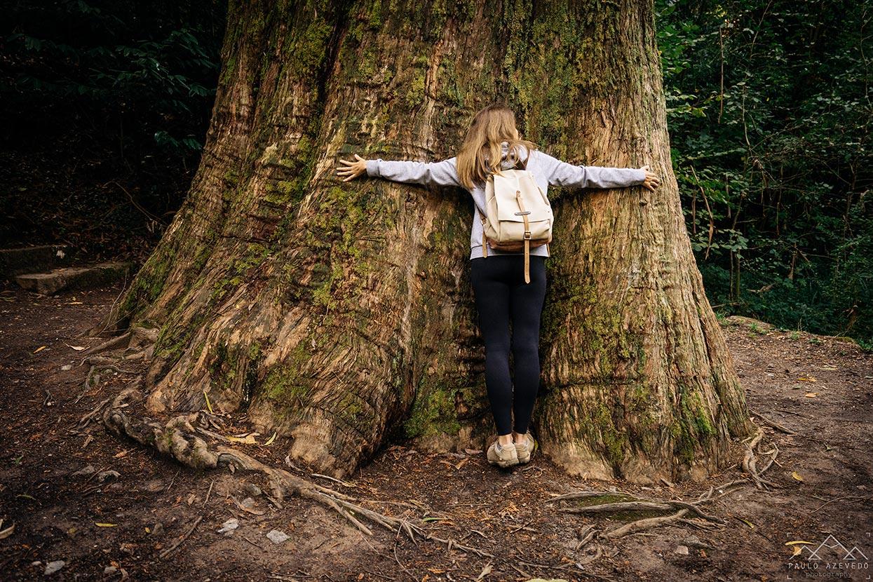 Abraço ao tronco do eucalipto gigante