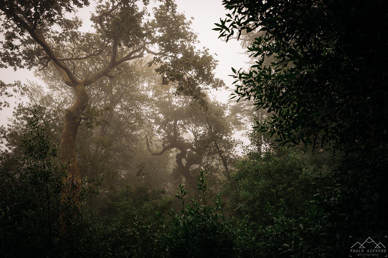 Mata do Bussaco sob o nevoeiro