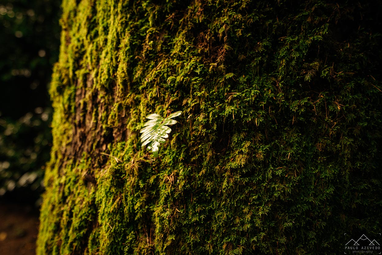 Folhinha num tronco