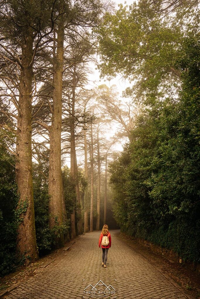 Estrada no Bussaco