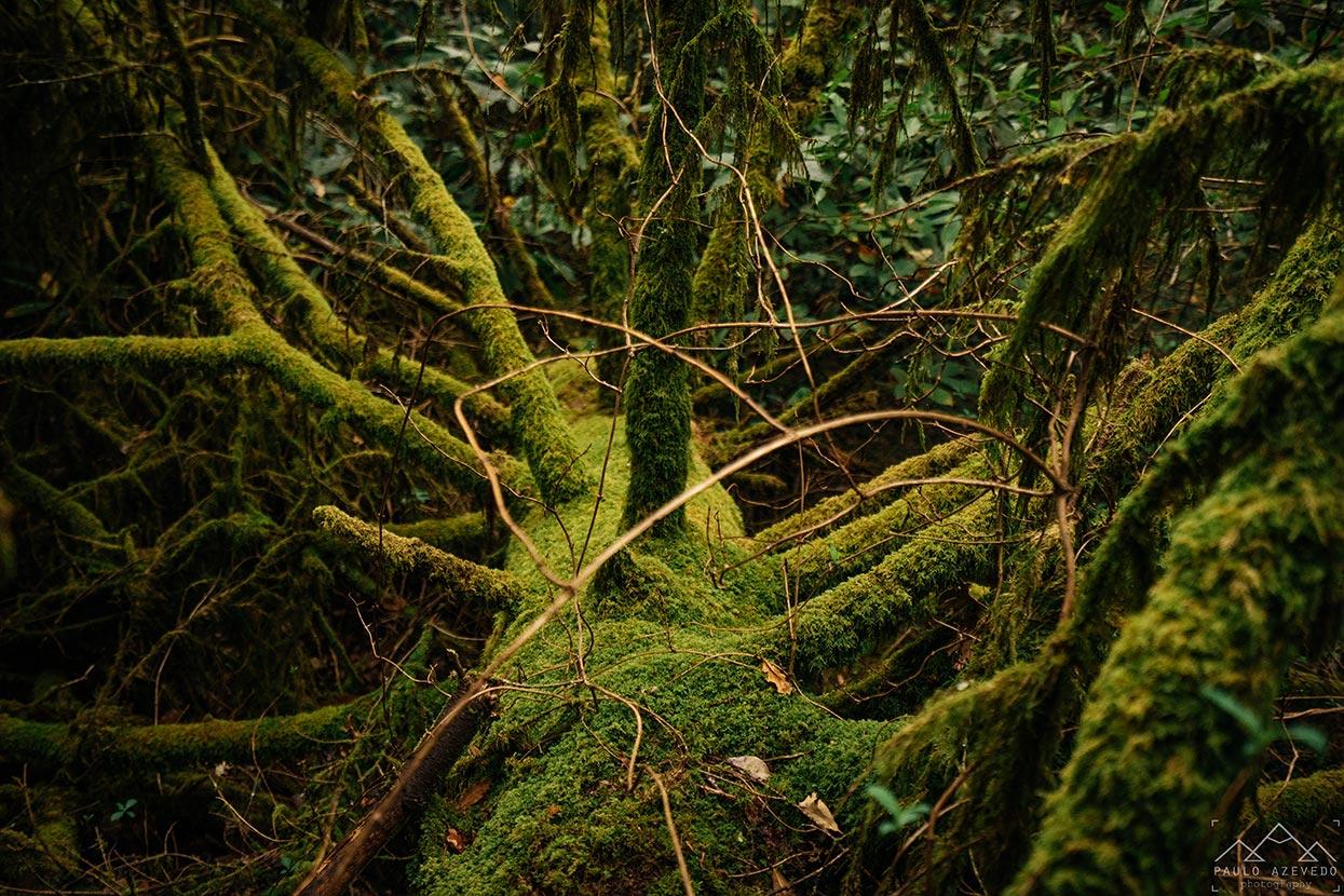 Musgo sobre uma árvore caída