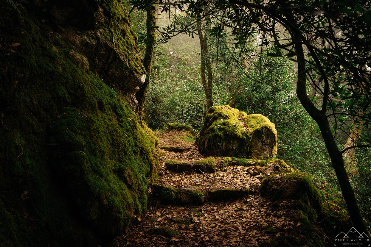 Floresta Relíquia, Bussaco
