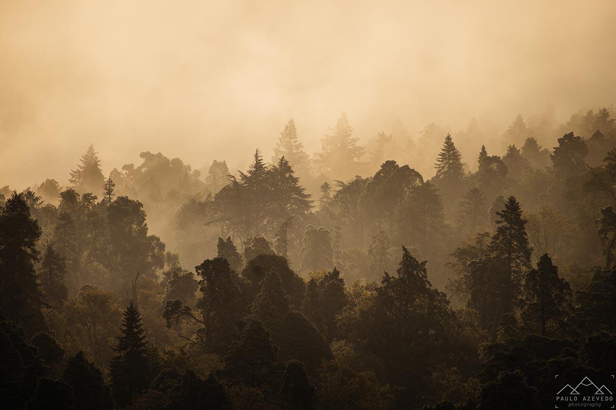 Bussaco sob o nevoeiro matinal