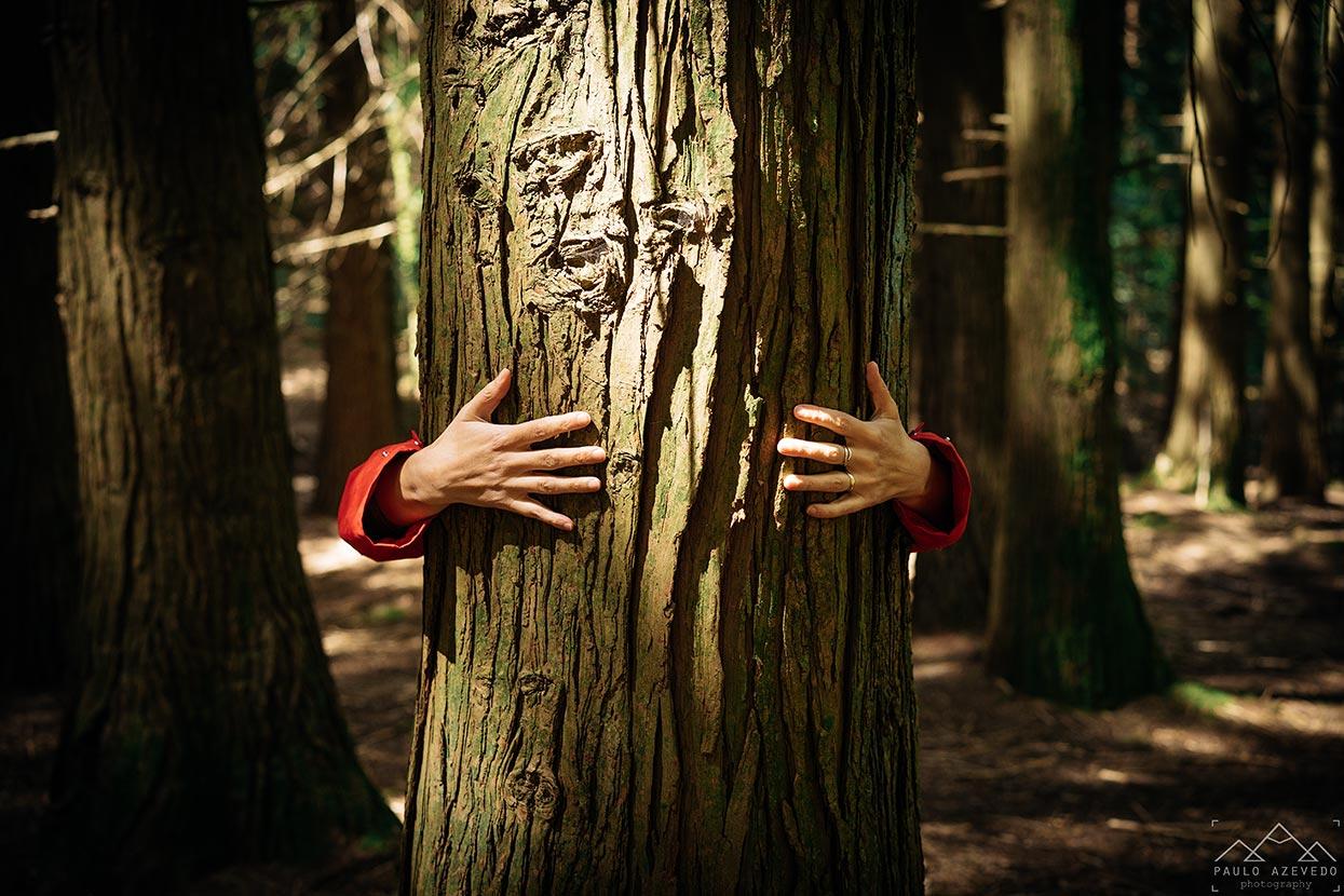 Abraço a uma árvore