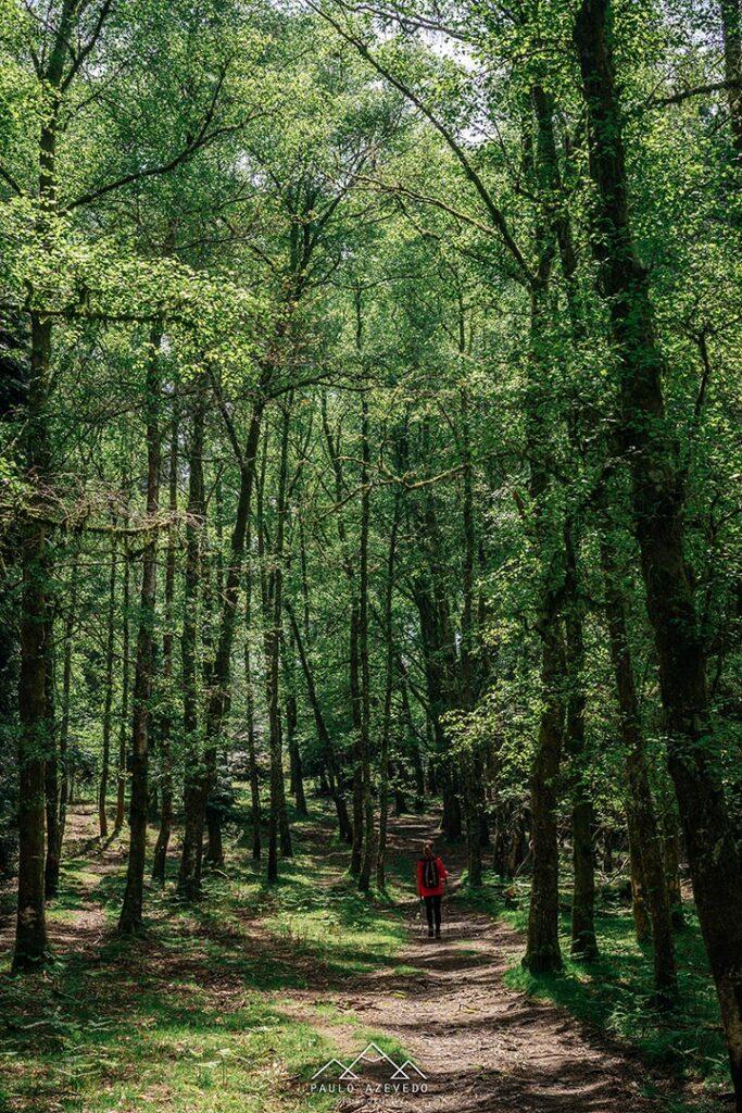 Floresta no Trilho das Brandas de Sistelo