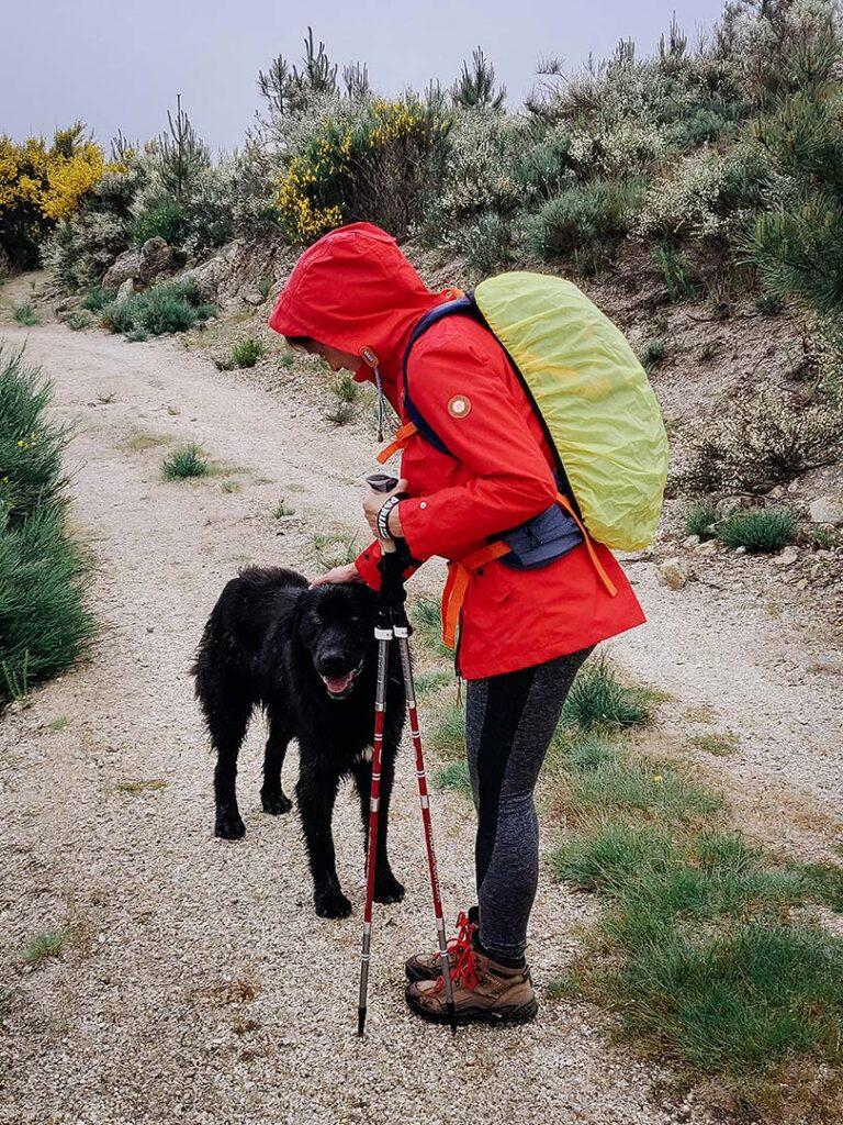 Encontro com um simpático cão na Rota da Garganta de Loriga