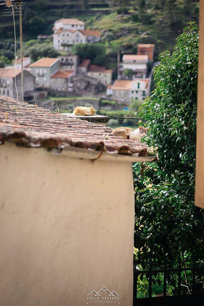 Gatos a dormir num telhado em Loriga