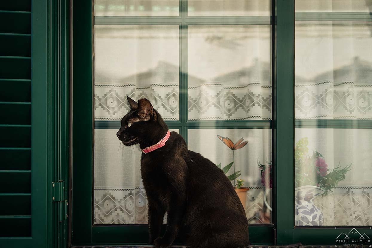 Gato à janela