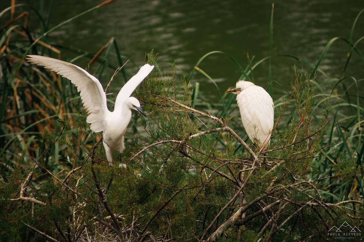 aves na quinta de marim