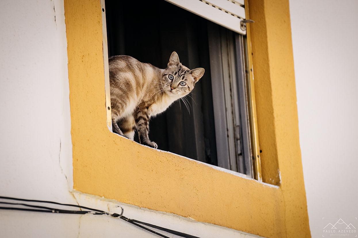 gato, castelo de vide