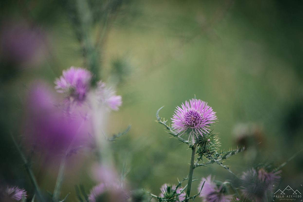 flores, paul do boquilobo
